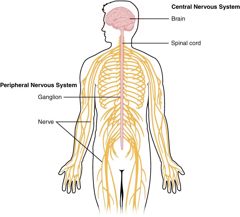 Nervous System Basics – Sunlight in Winter
